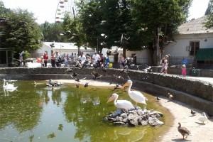 simf-zoopark0